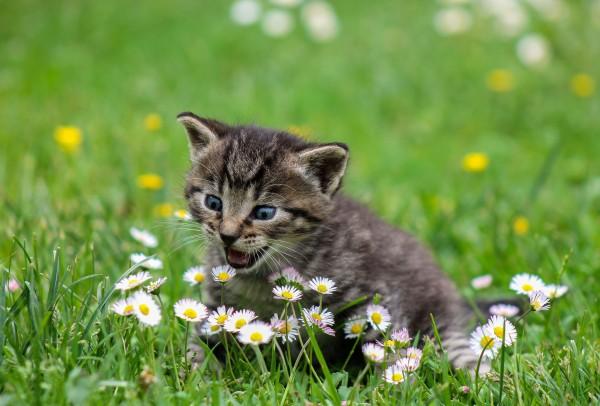 kitty-2948404