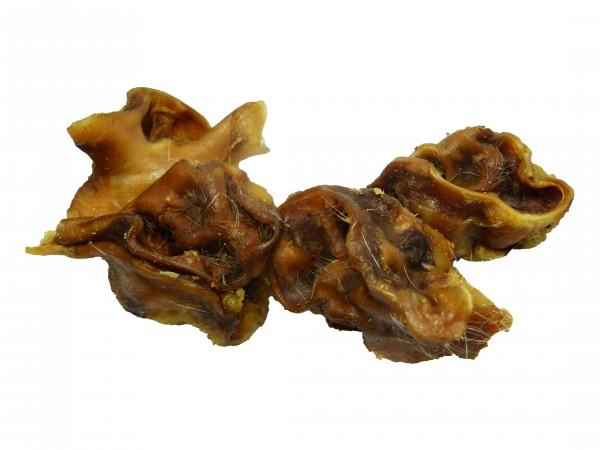 Schweineohrmuscheln